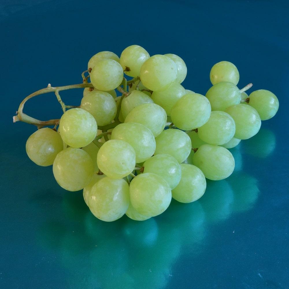 Grape-Green-Prime-ZA-DSC_0018-cr-sq-1000x1000-1.jpg