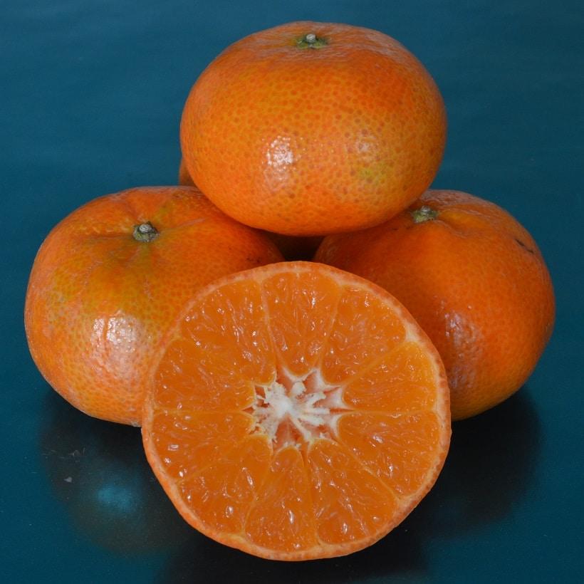 Mandarin-Tangold-PE-DSC_0219-cr-sq-25.jpg